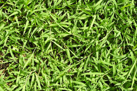 Small green leaves Stock Photo - 17592358