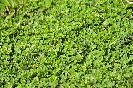 Small green leaves Stock Photo - 17592356