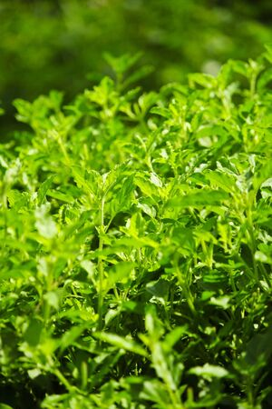 Small green leaves Stock Photo - 17592383
