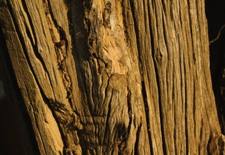 Old bark Stock Photo