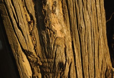 Old bark Stock Photo