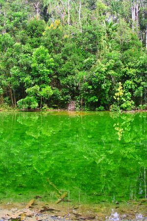 Reflection of trees in the emerald the pond  Reflection of tree Stock Photo - 17718052