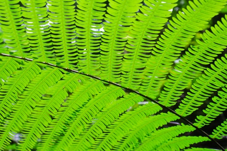 young fern leaf  nature background Stock Photo - 19900481