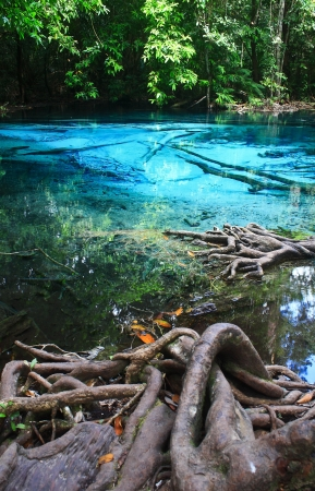Blue water in the pool and in the forest at Thailand  Blue water in the pool Stock Photo - 17591675