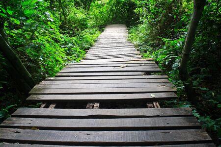 Houten brug in het bos Houten brug