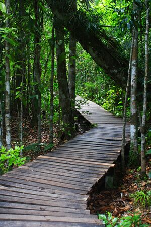 Wood bridge in the forest  Wood bridge Stock Photo - 17637076