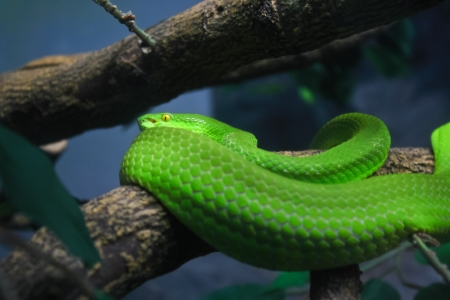 limbless: snakes green in the zoo of Thailand  Stock Photo