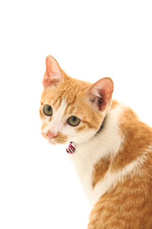 Red cat on white background. Stock Photo