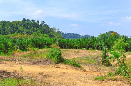 deforestacion: La deforestaci�n en el coraz�n de las monta�as, Tailandia.