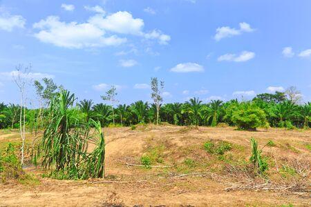 deforestacion: La deforestación en el corazón de las montañas, Tailandia.