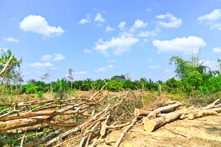 criminal activity: Deforestation in the heart of the mountains, Thailand.