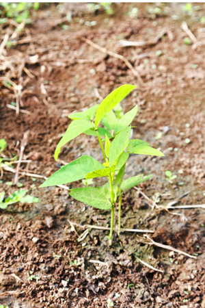 viewfinderchallenge3: Green Plant