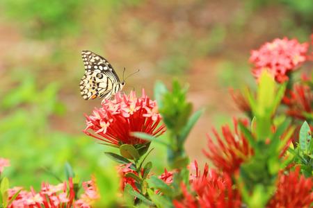 nice body: Butterfly on flower