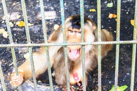 Monkey in zoo.