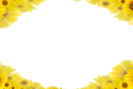 sunflower oil: Sunflower Background for presentationSunflower BackgroundSunflower Stock Photo