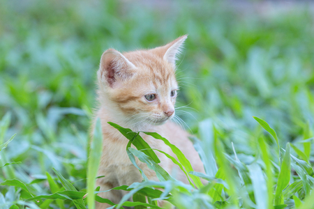 Beautiful cat lies in the grass.