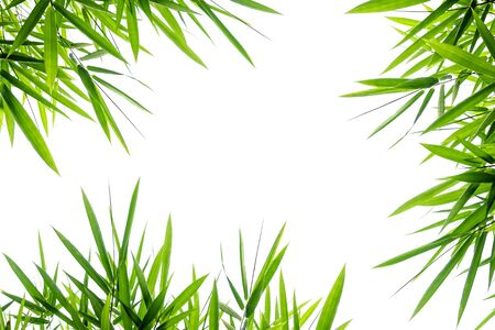 Bamboo leaves,Isolated on a white background 免版税图像