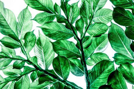 Motif de feuilles vertes, Fond naturel