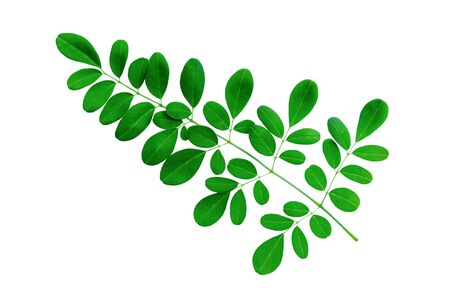 Green leaves isolated on a white background. File contains with clipping path.