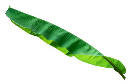 Banana leaf isolated on white background, File contains with clipping path. 免版税图像
