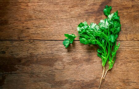 Fresh green coriander leaves on wooden table texture background. With blank copy space and add to text.