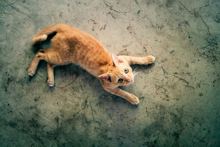 Selective focus. Orange cat is lying on the concrete floor and looking at the top. Top view photo. With blank copy space.