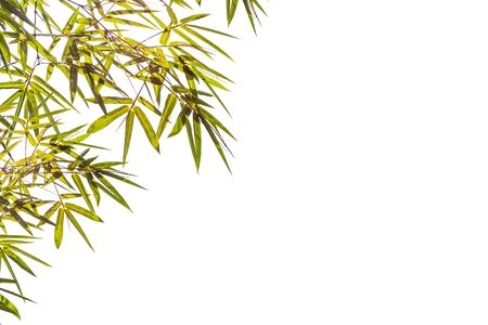 Bamboo leaves isolated on a white background, File contains with clipping path. With blank copy space.