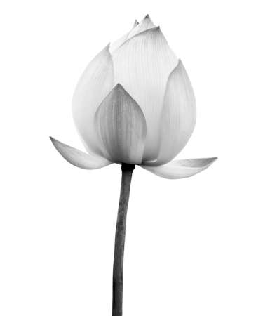 Lotus flower black and white color isolated on white background. File contains with clipping path. Standard-Bild