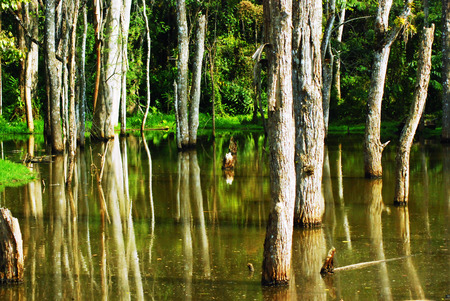Flooded forest  photo