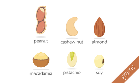 macadamia: peanut cashew nut almond macadamia pistachio soy illustration