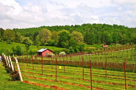 distant work: Small winery and barn in the spring. Stock Photo