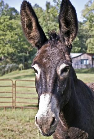 A donkey in a pasture with a cute expression.