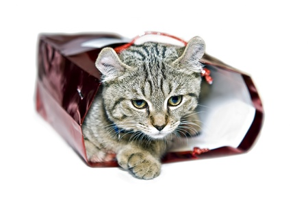 adopting: Kitten in a red gift bag.  Concept for giving love, adopting a pet, etc,  Stock Photo