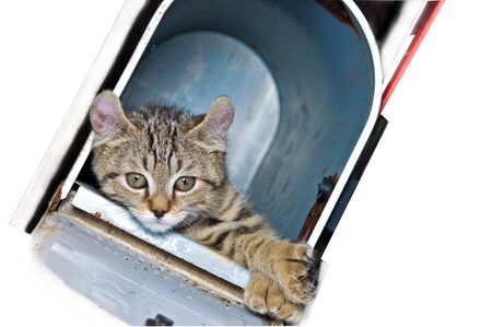 Kitten in a mailbox looking quite bored or lonely. Stock Photo