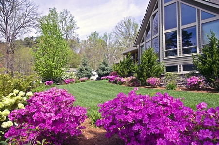 The front yard of a modern home showing the spring blooming azaleas.