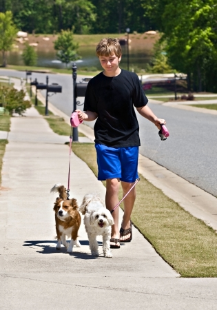 A preteen aged boy walking two dogs on a sidewalk in a suburban neighborhood. photo