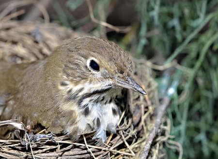 Een kleine vogel in een nest op de tak van een boom