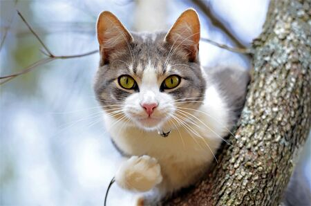 gray cat: Cute cat in a tree.