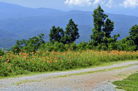 side road: Overlook in the mountains with wild flowers along the side of the road.
