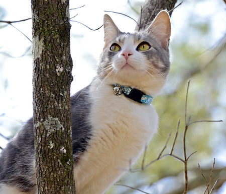animal limb: A young cat sitting in a tree looking up