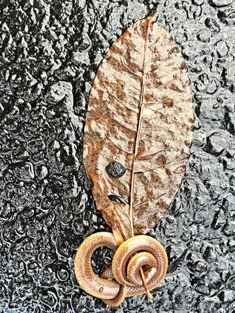 coiled snake: Snake Coiled Around a Leaf Stock Photo