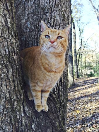 Orange Tabby cat in a tree looking out, cute expression.