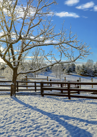 A beautiful winter morning, the sun is shining and making shadows on the snow in a fenced in pasture area. Stock Photo