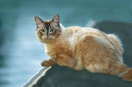 Cat on the Dock at a Lake