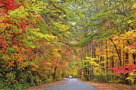 Fall Colors Along the Roadside Zdjęcie Seryjne