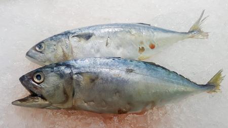 Two mackerel lying on the ice.