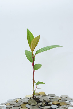 plant and coins over white background