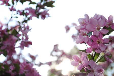 Springtime Zdjęcie Seryjne