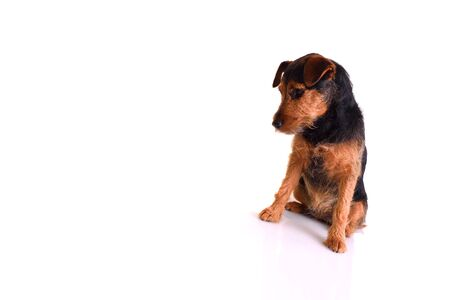 Image of a sad dog in a seated position. Image is isolated on white