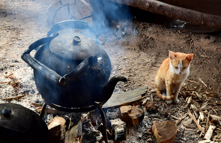 house ware: A cat sitting near the warm fire of old kettle